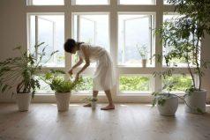 Decoración con plantas, ¡dale color y vida a tu hogar!