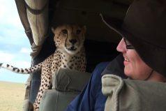¿Qué harías si un leopardo salta a tu auto durante un safari?