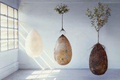La urna funeraria biodegradableque convierte tu cuerpo en árbol