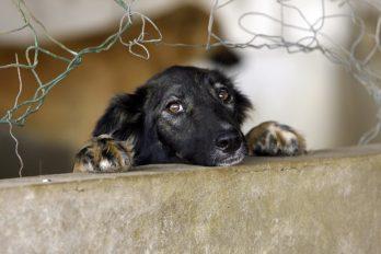 ¡Un ejemplo a seguir! Costa Rica aprueba ley que castiga con cárcel el maltrato animal