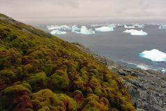 Las elevadas temperaturas están pintando de verde el paisaje helado de la Antártida