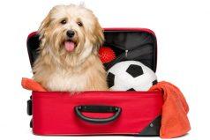Viaja seguro con tu mascota, 4 cosas que debes saber
