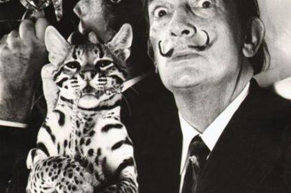Famosos amantes de los gatos al igual que tú