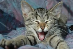 7 mentiras que creías ciertas de tu gato