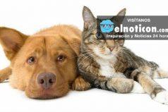 ¿Por qué los perros obedecen y los gatos no? ¡Quedarás con la boca abierta!