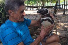 Albañil de 71 años salvó a un pingüino desnutrido y cubierto de petróleo; lo alimentó hasta que logró recuperarse