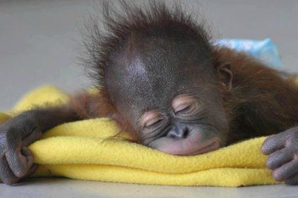 ¿Te encanta dormir? Felicidades hoy es el día mundial del sueño