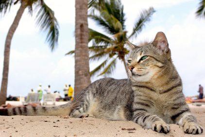 Mejoran estados depresivos, ayudan a personas con autismo y otros beneficios para la salud que traen los gatos