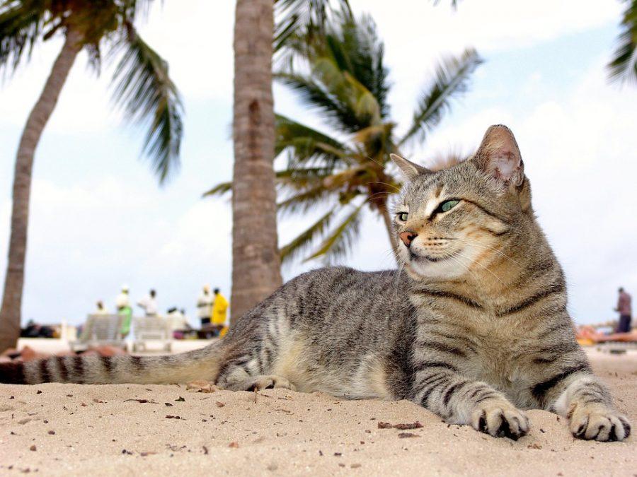 Resultado de imagen para gato en la playa meme