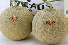 El par de melones más caros del mundo ¿Quieres un par?