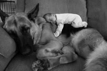 20 razones por las que un perro debe ser el mejor amigo de un niño