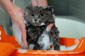 Pues sí, el gato es un animal misterioso ? Pero no te contagies de los mitos ¡Las cosas como son!