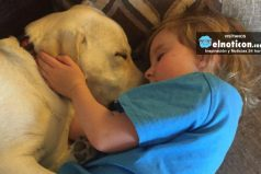 Este perro salva a su pequeña dueña de morir ahogada por convulsión