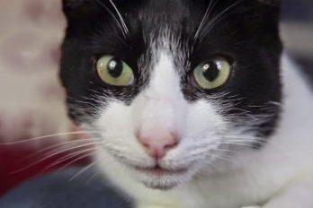 Morirás de ternura, conoce ya 10 animales con récords mundiales