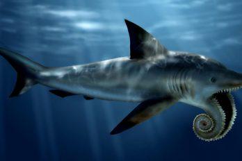 10 extrañas criaturas extintas, animales que te enloquecerán