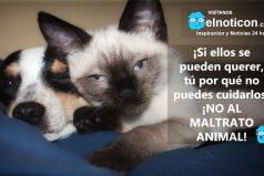 ¡No al maltrato animal!