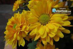 7 plantas que mantendrán puro el ambiente de tu casa u oficina