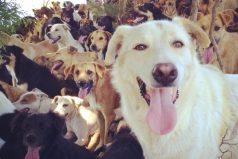 Conoce la tierra de los perros callejeros, un lugar en el que te sentirás en el paraíso