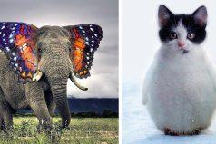 Los animales híbridos más increíbles del mundo, seguro no los conocías y quedarás impactados