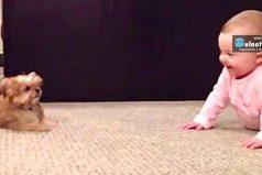 Bebé y mascota se diviertan sin parar ¡Morirás de ternura!