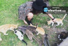 ¿Amas los gatos? ¡Debes ir a esta plaza en Perú donde hay cientos de ellos!