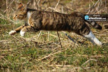 Mira la reacción de estos gatos al ver un pepino