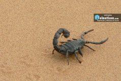 Veneno de escorpión colombiano podría ayudar a tratamientos contra el cáncer