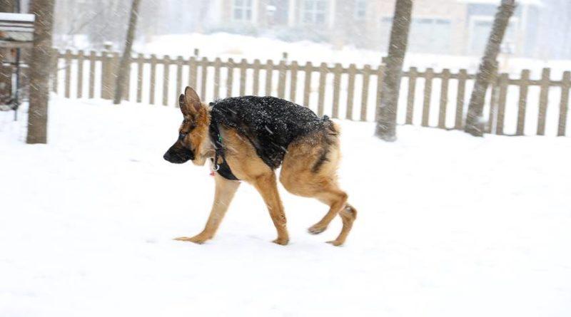 quasi-nieve