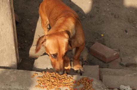 Perro comiendo después de tragedia en Ecuador