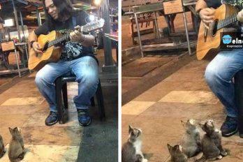 4 gatitos amantes de la música se detuvieron a escuchar a un cantante callejero que todos ignoraban