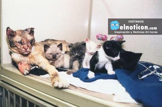 Escarlata la gata que salvó la vida de sus gatitos