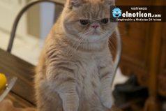 Te presentamos a George, el gato que se para en dos patas como un pequeño humano