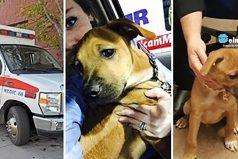 Este cachorrito persiguió una ambulancia hasta que se detuvo
