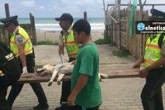 Han rescatado más de 200 perros tras el terremoto en Ecuador