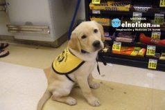 Guías, ayudantes, policías, terapeutas… ¡Ellos son los perros más ejemplares de la sociedad!