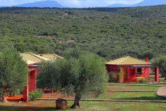 Las granjas ecológicas de Grecia