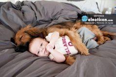 Esta imagen muestra lo importante que son los animales para los niños