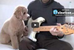 Después de ver lo que hace este perro vas a querer iniciar una banda con él
