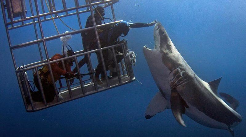 Nadando con tiburones en una jaula