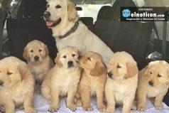 Esta es una hermosa familia