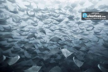 La FUERZA de la naturaleza plasmada en la migracion de estos animales