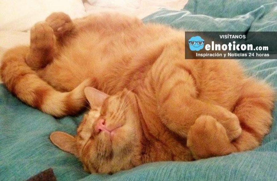 Este gato va a seguir durmiendo donde sea y cómo sea