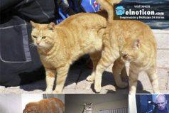¡Estas fotografías de gatos han sido tomadas en el mejor momento posible!