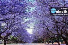 El bellísimo árbol que podría salvar el mundo