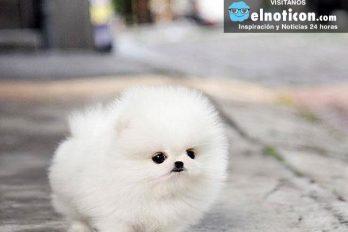 Estos son los animales más adorables que existen