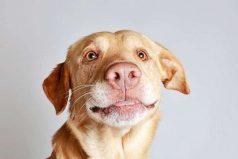 ¿Cuántos años humanos tiene tu perro?