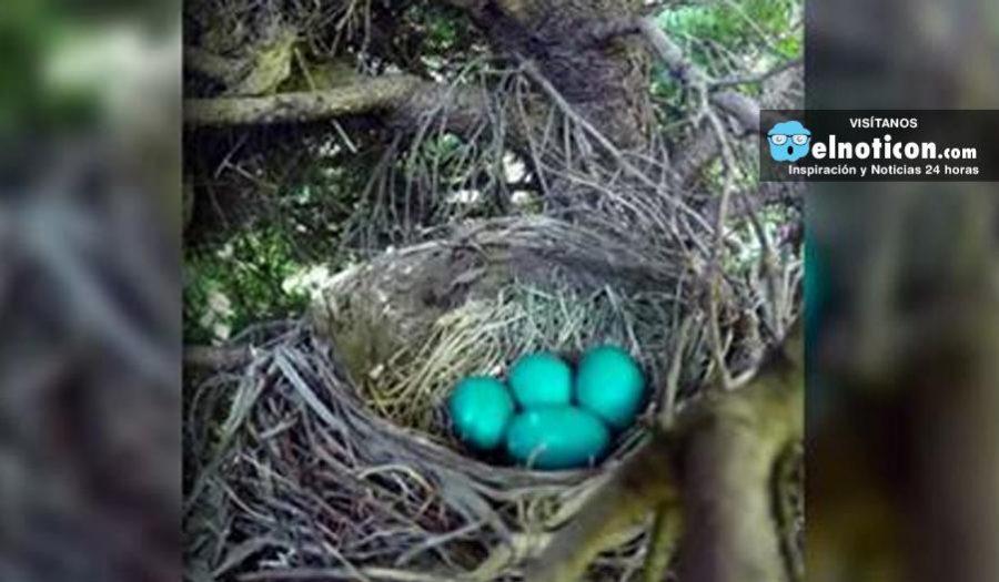 Video que pretendía captar el nacimiento de unos polluelos se vuelve viral por una sorpresa