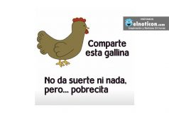 Comparte esta gallina