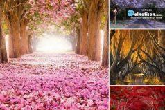 Caminos de árboles