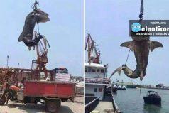 Arrestan a pescadores por matar a un tiburón ballena en China